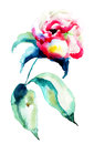 Beautiful peony flower watercolor painting Stock Photography