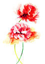 Beautiful peony flowers watercolor painting Royalty Free Stock Image