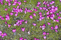Beautiful petals on moss Stock Image