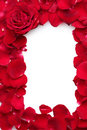 Beautiful petals of red roses and rose Royalty Free Stock Photo