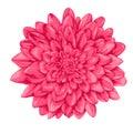 Beautiful pink dahlia isolated on white background. Royalty Free Stock Photo