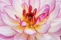 Beautiful pink flower Royalty Free Stock Image