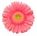 Beautiful pink flower f d Stock Image