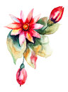 Beautiful pink flower flowers watercolor painting Stock Photography