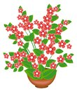 Beautiful pink flower. The plant grows in a flower pot. Vector illustration
