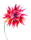 Beautiful pink flower watercolor painting Stock Photography