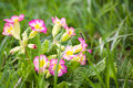 Beautiful pink flowers bloom in spring time Royalty Free Stock Photo