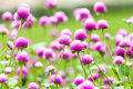 Beautiful pink flowers in the garden Stock Photo