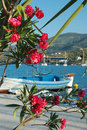 Beautiful pink flowers on Poros embankment, Greece Royalty Free Stock Photo