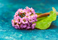 Beautiful pink flowers for spa Royalty Free Stock Photo