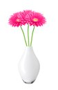 Beautiful pink gerbera daisy flowers in vase isolated on white Royalty Free Stock Photo
