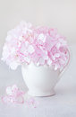 Beautiful pink hydrangea flowers. Royalty Free Stock Photo