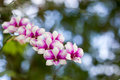 Beautiful pink magenta orchid flowers plan with bokeh Royalty Free Stock Images