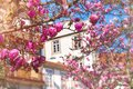 Beautiful pink magnolia flowers in old Porto city