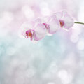 Beautiful pink orchid branch Royalty Free Stock Photo