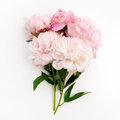 Beautiful pink Peonie flower on light background Royalty Free Stock Photo