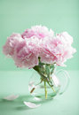 Beautiful pink peony flowers bouquet in vase Royalty Free Stock Photo