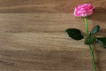 Beautiful pink rose flower with on rustic wood  background. Royalty Free Stock Photo
