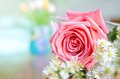 Beautiful pink rose with small white flower Royalty Free Stock Photography