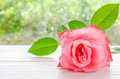 Beautiful pink rose on a white wooden table with light bokeh Royalty Free Stock Photo