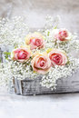 Beautiful pink roses and Gypsophila (Baby's-breath flowers) Royalty Free Stock Photo