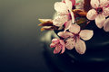 Beautiful pink Spa Flowers on Spa Hot Stones on Water Wet Backgr