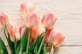 Beautiful pink tulips on white rustic wooden background. tender Royalty Free Stock Photo