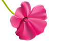 Beautiful pink vector flower Royalty Free Stock Image