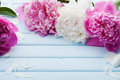 Beautiful pink and white peony flowers on blue vintage background