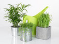 Beautiful plants and green watering can on white background Stock Photo