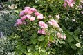 Beautiful plants in Hamburg Germany garden fifty megapixels high quality Royalty Free Stock Photo