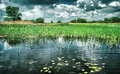 Beautiful pond landscape Royalty Free Stock Photo