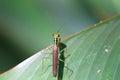 Beautiful Praying Mantis Royalty Free Stock Photo