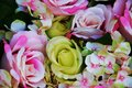 Pink yellow roses and green leaves flowers, close up Royalty Free Stock Photo