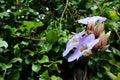 Beautiful Purple Or Blue Bloom...