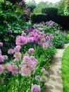 Beautiful purple flowerheads at hampton court castle leominster and lilac flower borders in gardens in herefordshire Stock Photography