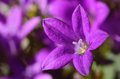 Beautiful purple flowers closeup photo of Stock Photo