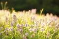 Beautiful Purple Flowers In Na...
