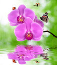 Beautiful purple orchid with butterfly and ladybugs Stock Images