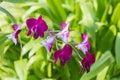 Beautiful purple orchid flower on tree. Royalty Free Stock Photo