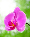 Beautiful purple orchid on green background Stock Photography