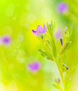 Beautiful purple wild flowers on green field soft focus floral background spring nature freshness concept Stock Images