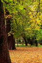 Beautiful quiet park at autumn Stock Photos