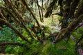 Beautiful rain forest at ang ka nature trail in doi inthanon nation park, Thailand Royalty Free Stock Photo