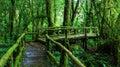 Beautiful Rain Forest At Ang K...