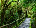 Beautiful rain forest at ang ka nature trail in doi inthanon national park thailand Stock Photo