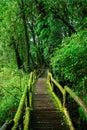 Beautiful rain forest at ang ka nature trail Royalty Free Stock Photo