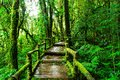 Beautiful rain forest at ang ka nature trail Royalty Free Stock Photo