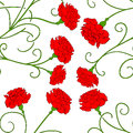 Beautiful red carnation isolated Vector 3 Royalty Free Stock Photo