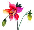 Beautiful red flower watercolor painting Stock Photos